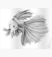lil fish in graphite Poster