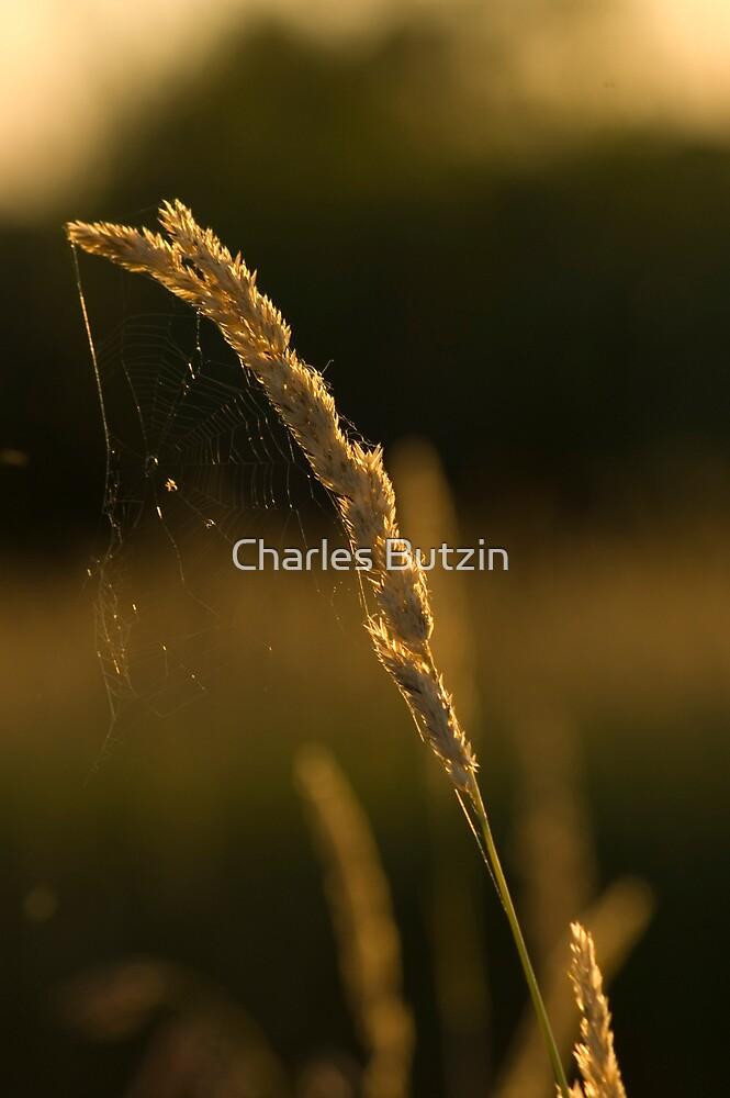 Summer Grass by Charles Butzin