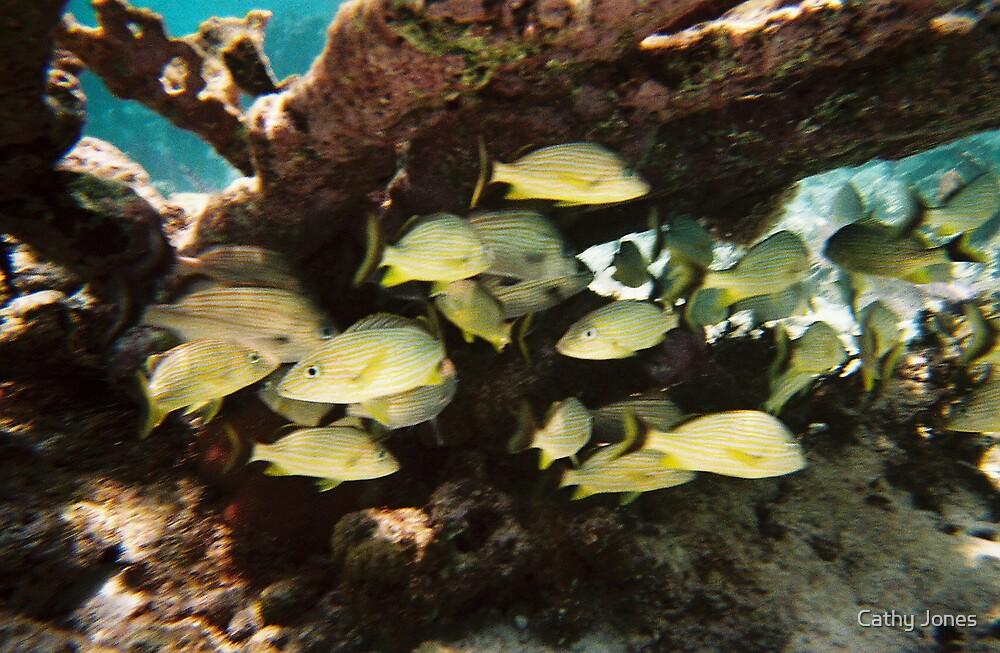 Underwater in Cozumel by Cathy Jones