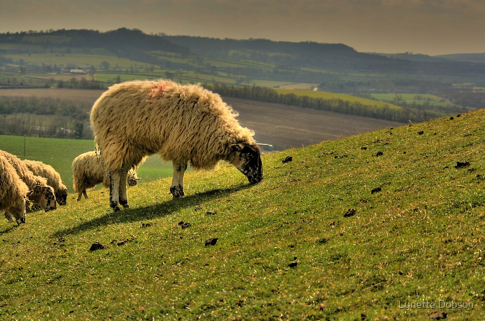 Burton Dassett sheep by Lynette Dobson