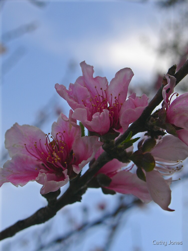 Peach Blossoms by Cathy Jones