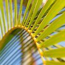 Palm Frond by Alex Preiss