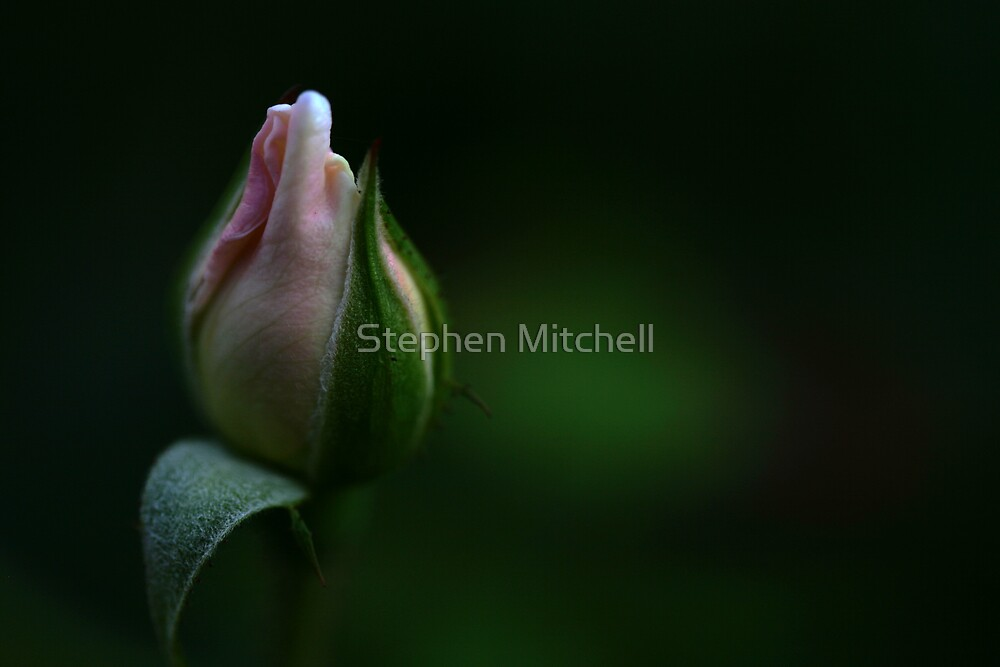 Stripped in Layers by Stephen Mitchell