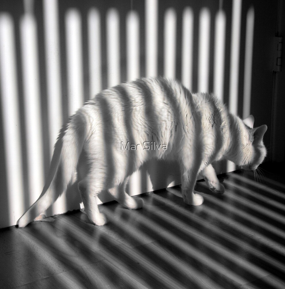 The cat who thought she was a Zebra by Mar Silva
