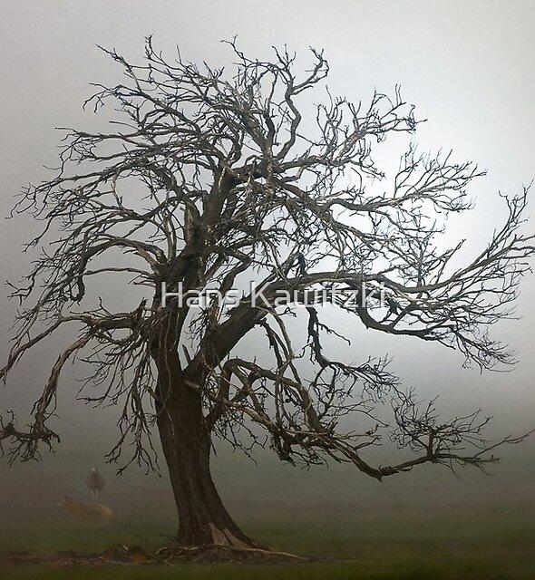 1164 Lifting Fog by Hans Kawitzki