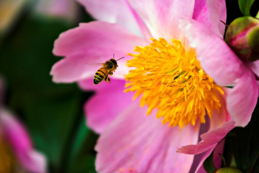 Flower and Bee by Matt Koenig