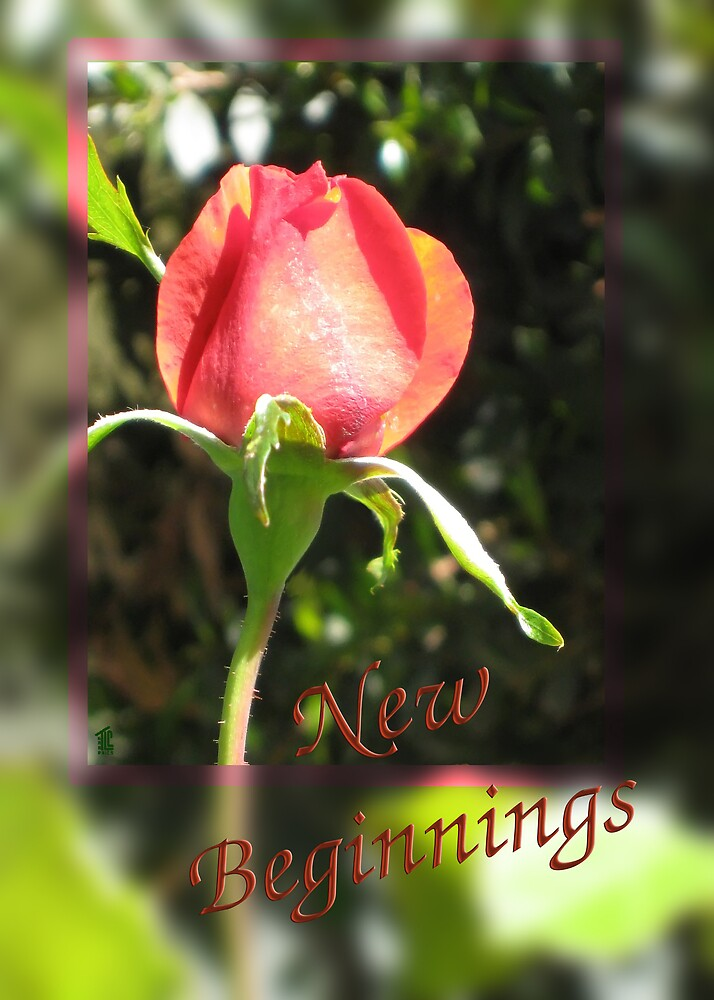 First Rose of Spring_New Beginnings by TLCGraphics