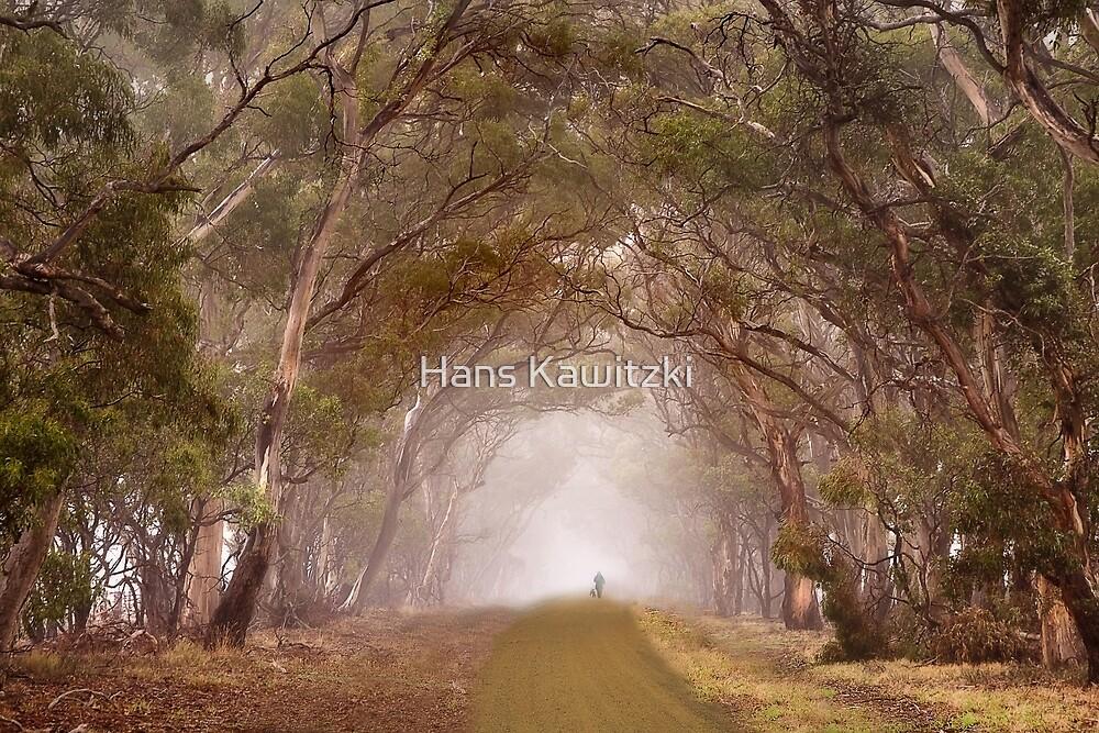 1167 Gum tree lane by Hans Kawitzki