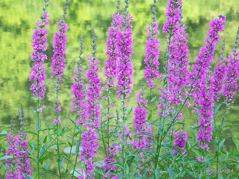 Flowers at Bradys Run by peggywright