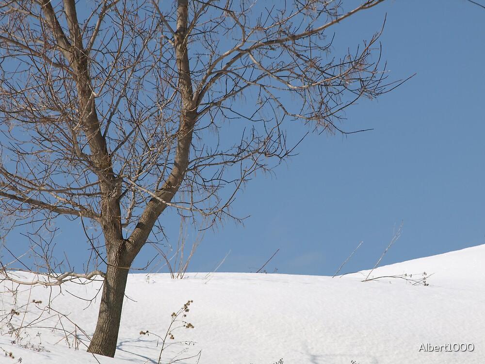 NC trees by Albert1000
