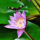 Butterfly On Water Lily by RickDavis