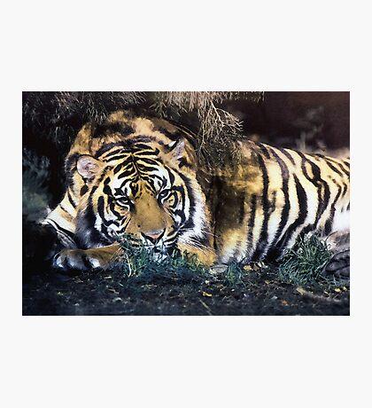 Big Cat Photographic Print