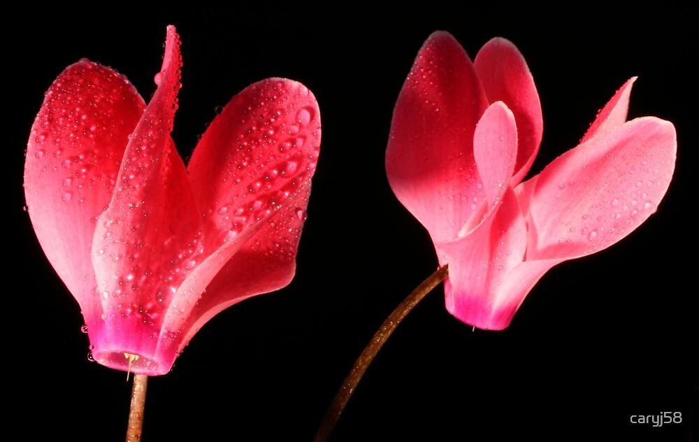 Petals by caryj58