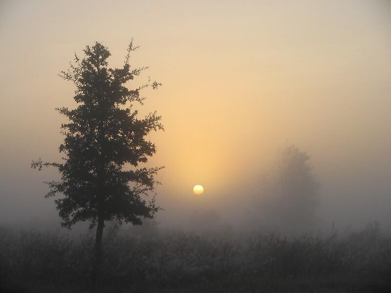 sunrise mist by srt63