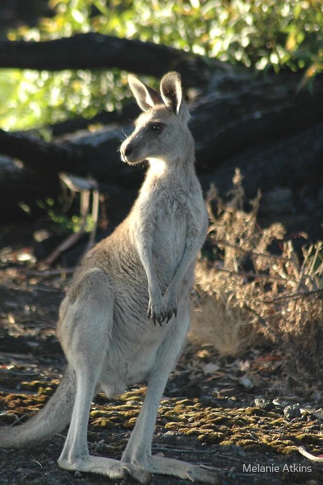 kangaroo by Melanie Atkins