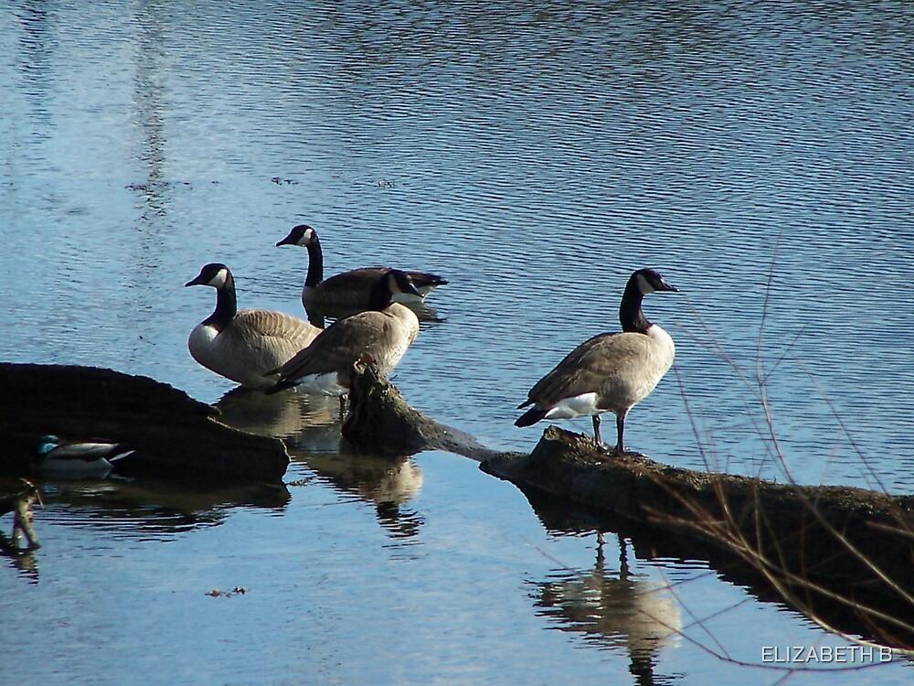WATER BIRDS by ELIZABETH B