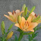 Yellow lilies by Ana Belaj