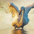 Calendar of Birds by Brian Tarr