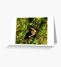 BUSH BUTTERFLY Greeting Card