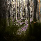 Magical Forest by Daniela M. Casalla