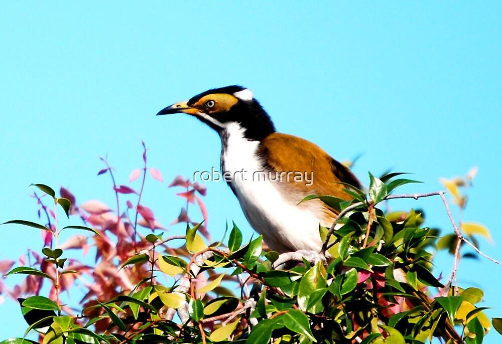 Banana Bird by robert murray