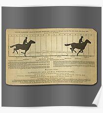 Eadweard Muybridge – 1830-1904 – Animal Locomotion Theory – Horse Poster - Grey Poster