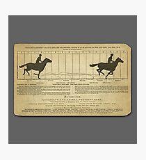 Eadweard Muybridge – 1830-1904 – Animal Locomotion Theory – Horse Poster - Grey Photographic Print