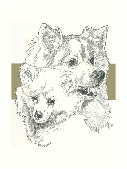 American Eskimo, Father & Son by BarbBarcikKeith