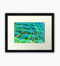 Peacock Feather Waterfall Framed Print