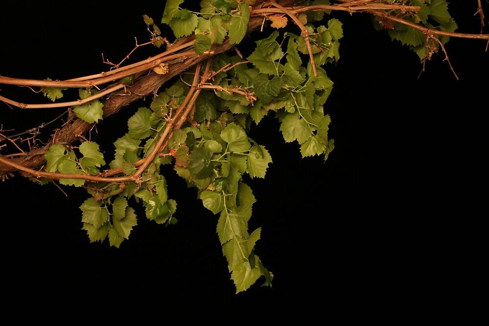 Along the Grape Vine by Shmacky