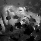 Hippo/Fish by vamified