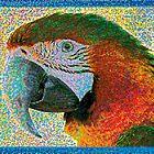 Bunter Macaw von Celso Studio