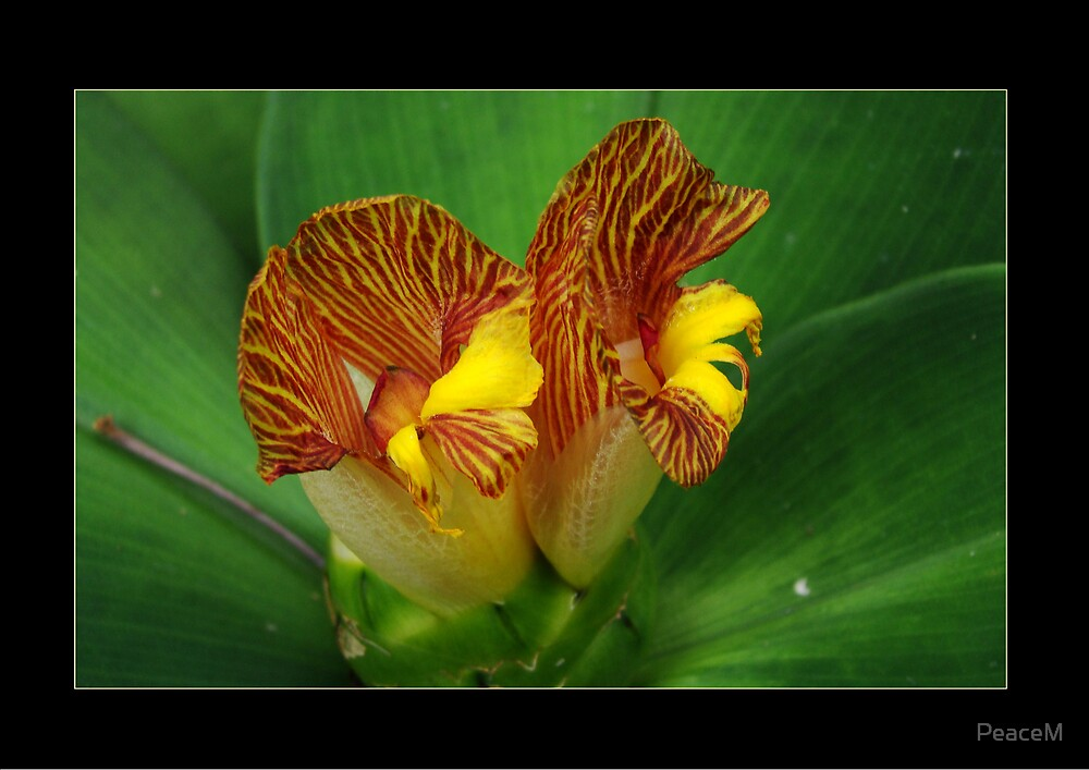 Tropical Flowers Series - I by PeaceM