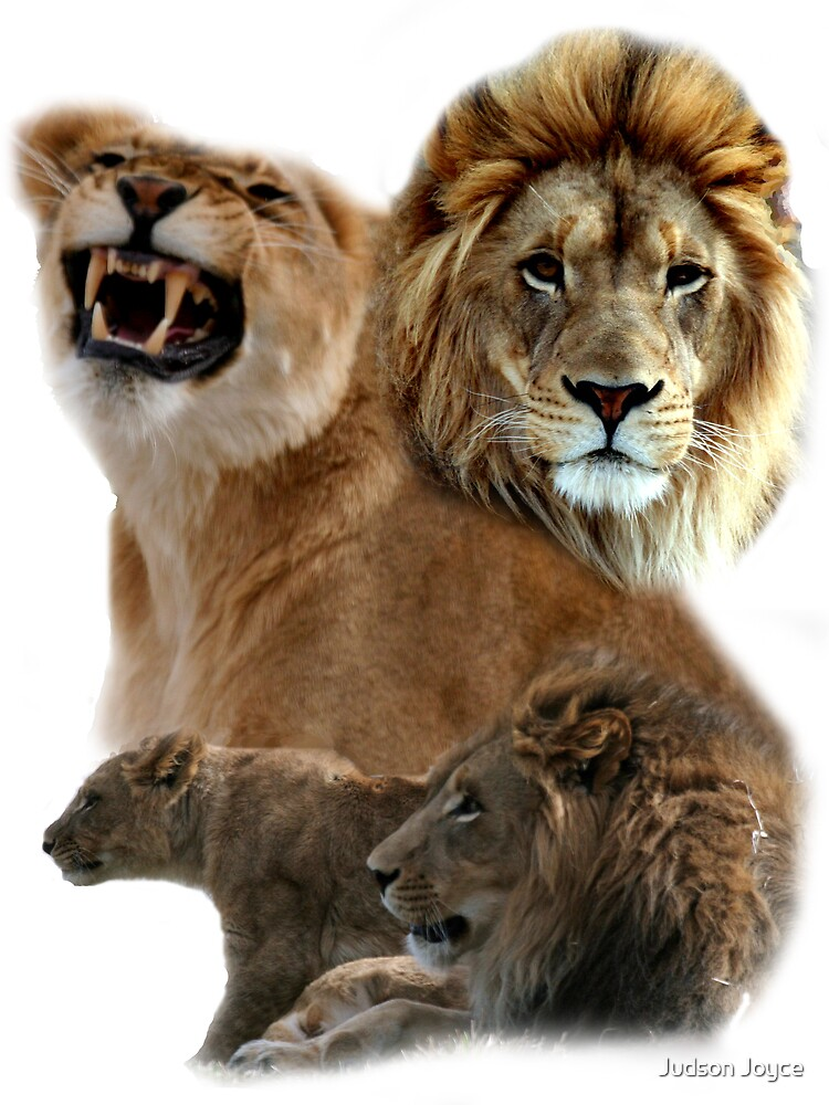 Lion Collage by Judson Joyce