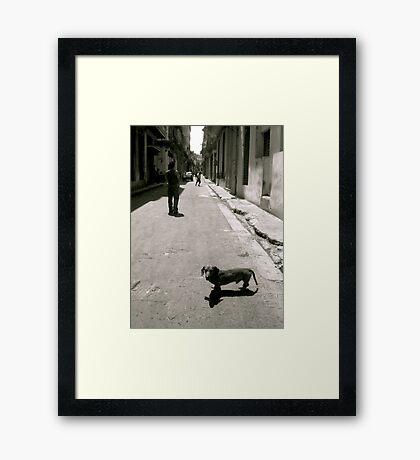Street Dog Framed Print