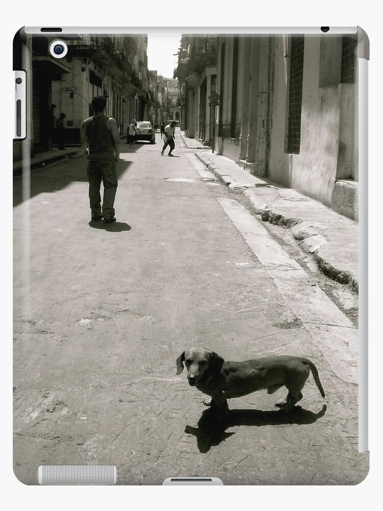 Street Dog by Valerie Rosen