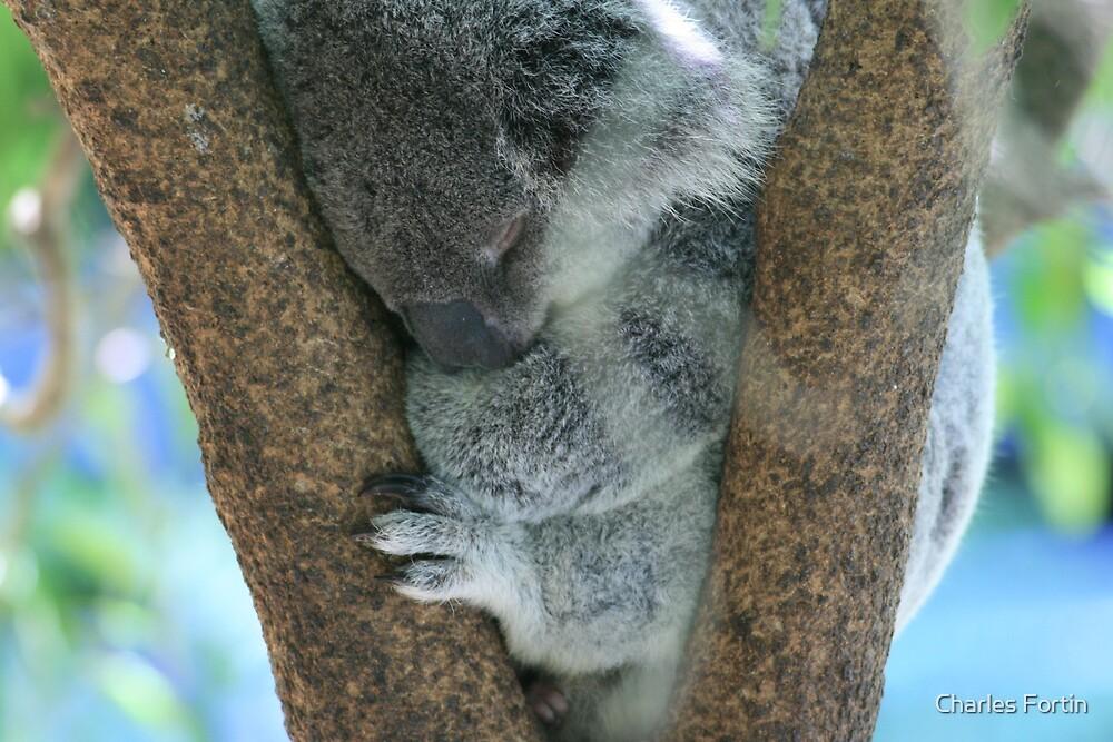 Relaxing Koala by Charles Fortin