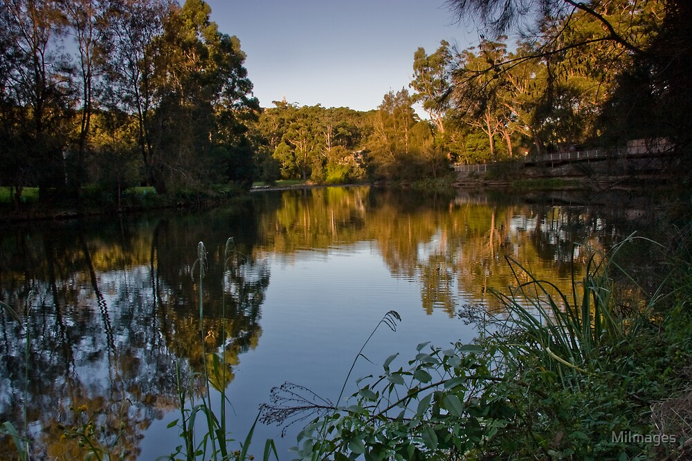 Lane Cove River Park by MiImages