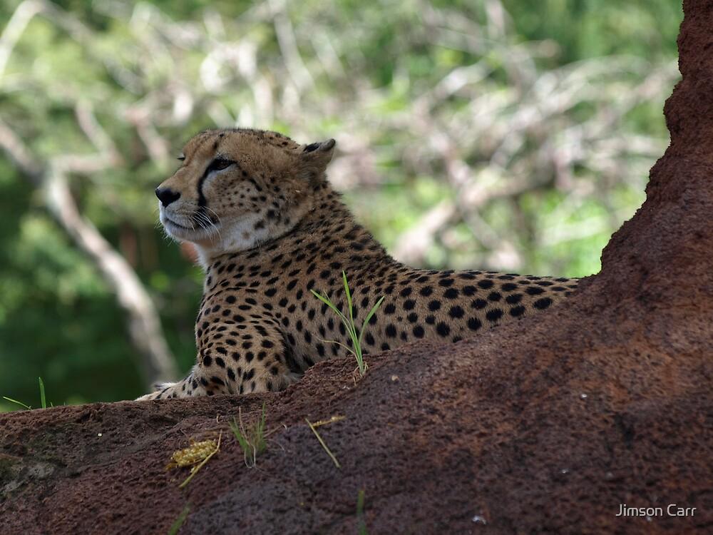 Cheetah by Jimson Carr
