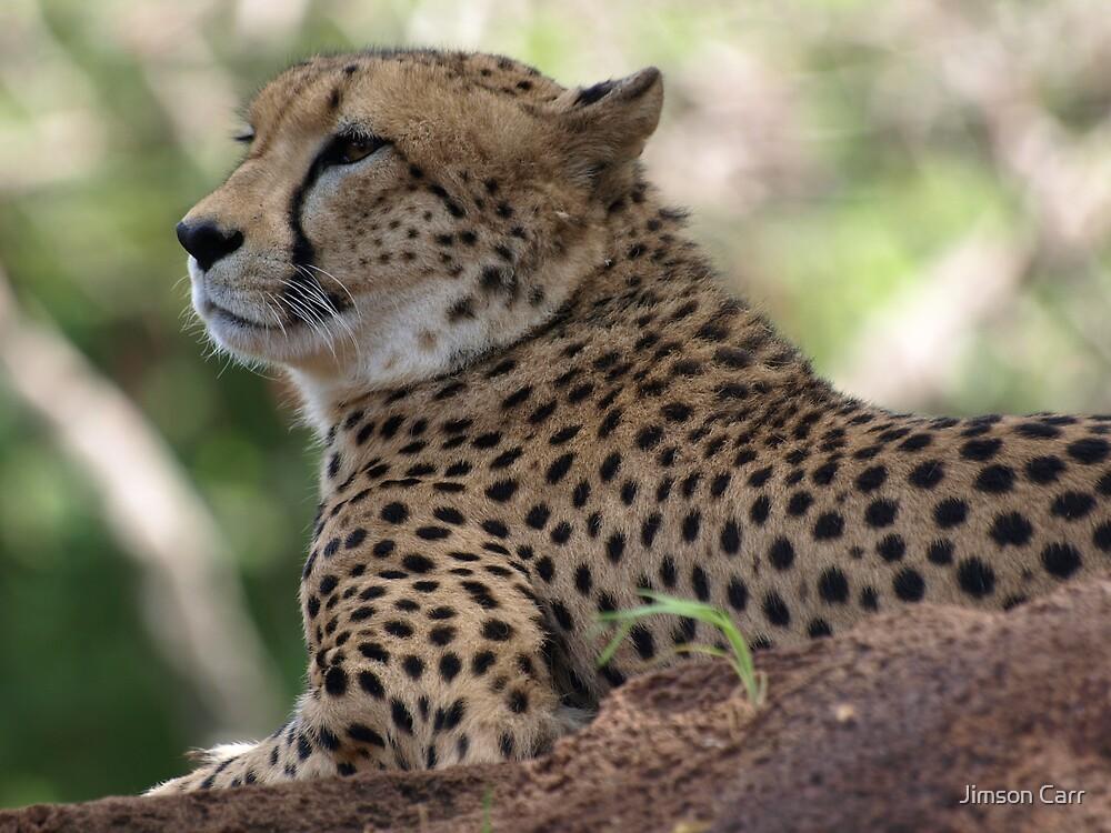 Cheetah II by Jimson Carr