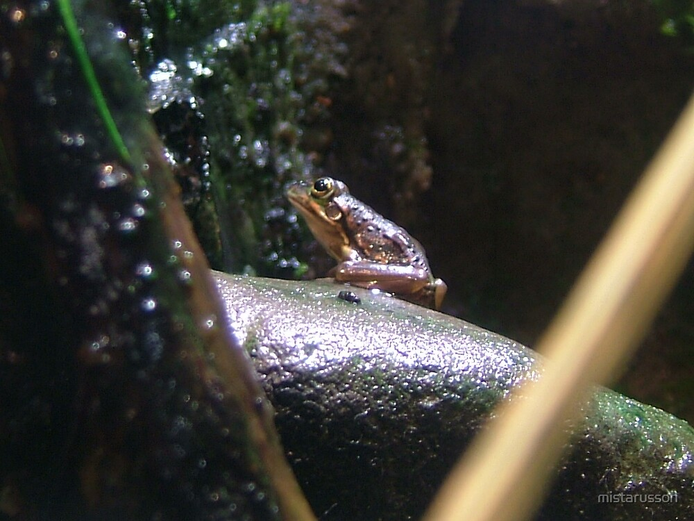Frog by mistarusson