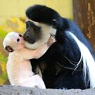 Eastern Black and White Colobus by Sheila Smith