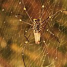 golden orb spider by xXDarkAngelXx