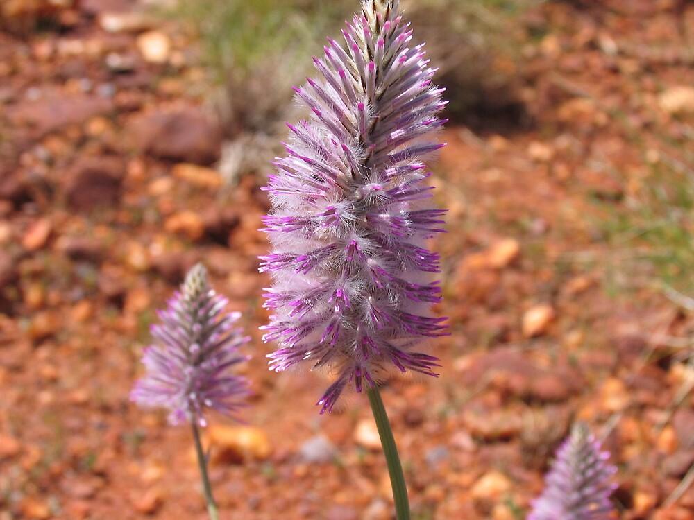 Purple plant by Klikklak