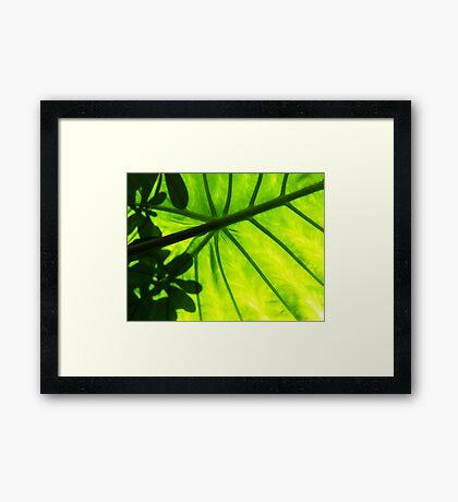 Shadow Framed Print