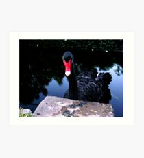 A Swan Art Print