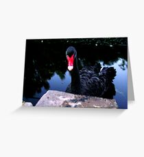 A Swan Greeting Card