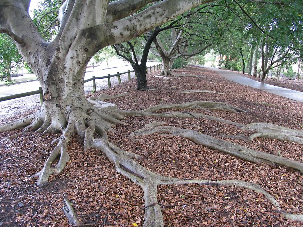 Tree roots. by Klikklak