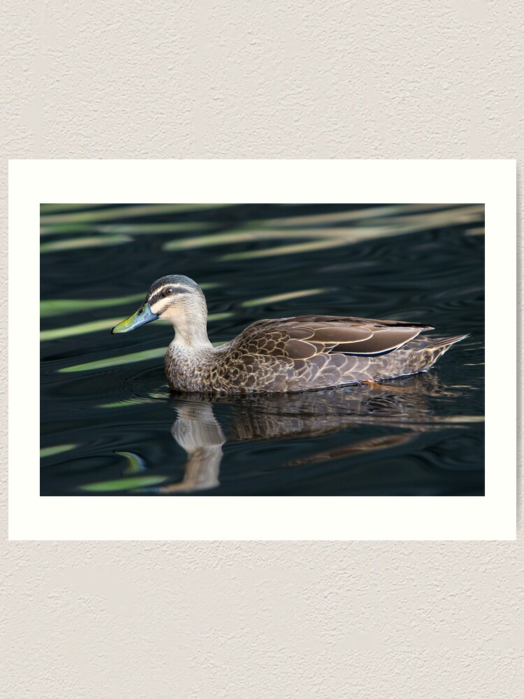 Alternate view of Duck shooting RedBubble Style. Art Print