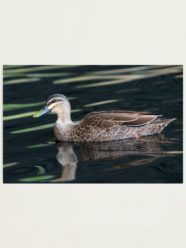 Alternate view of Duck shooting RedBubble Style. Photographic Print